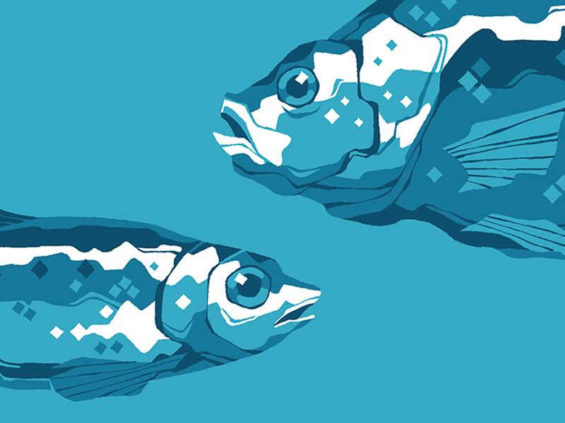 Pesci fuor d'acqua
